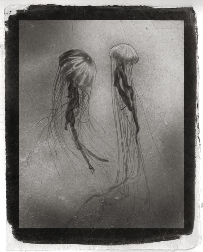 Toerzs_Jellyfish-kozo